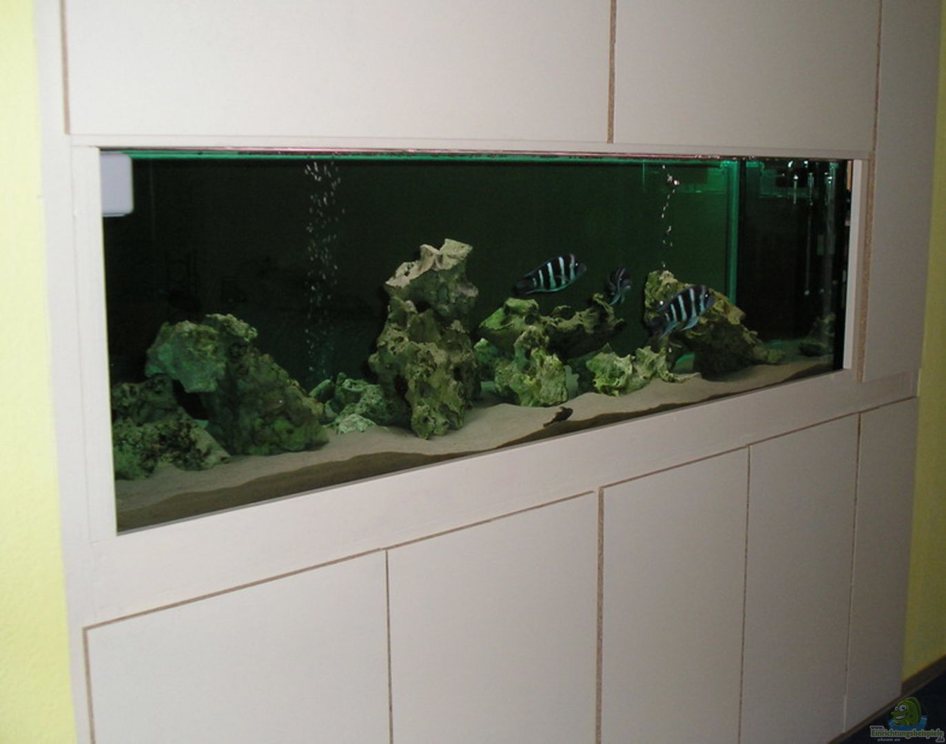 aquarium von mario j hne becken 823. Black Bedroom Furniture Sets. Home Design Ideas