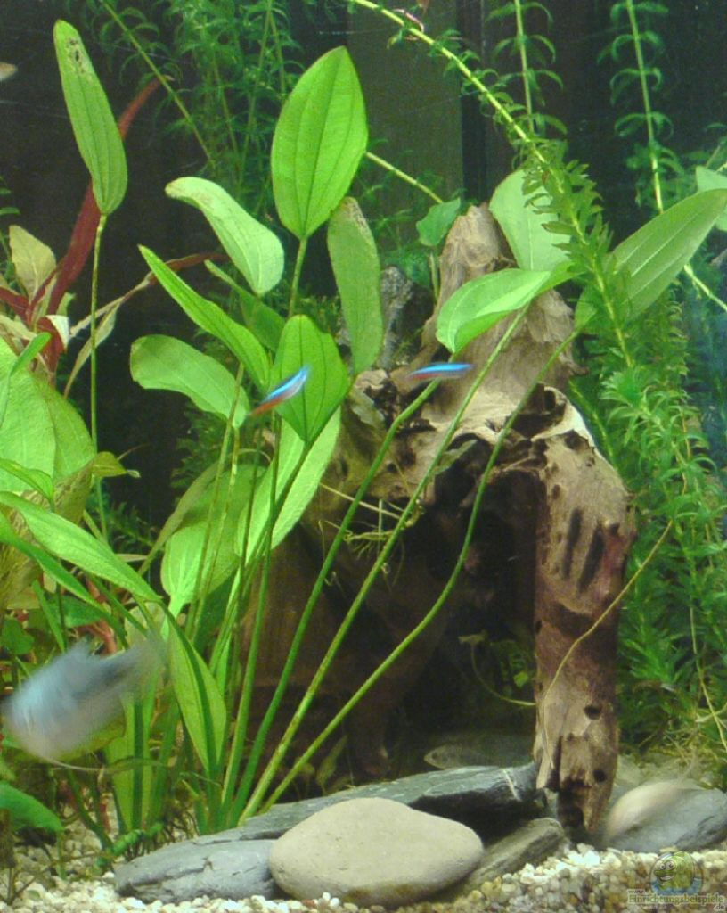 Example no 8246 from the category community tanks for Aquarium wurzel