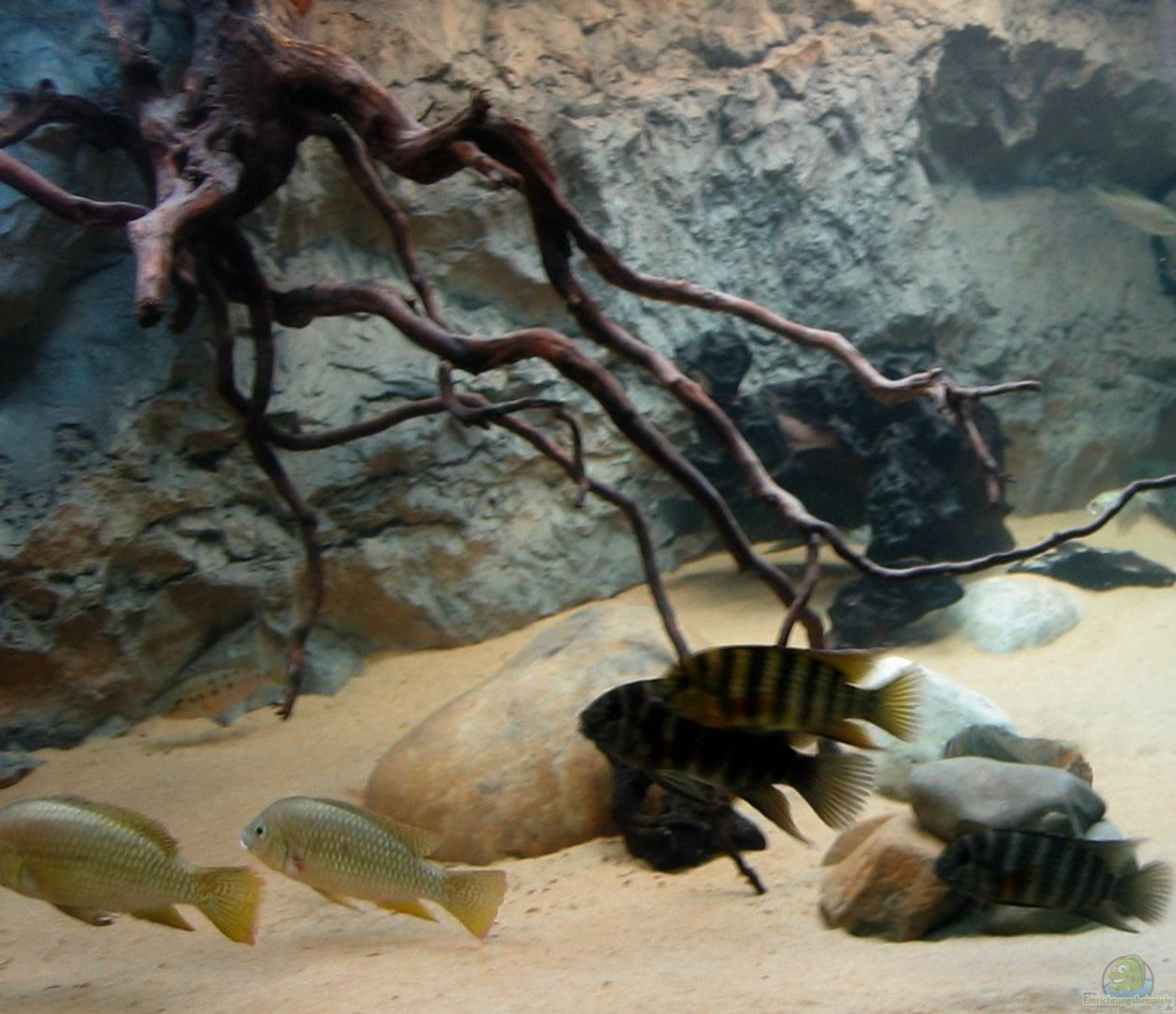 Dekoration Im Aquarium Becken 8248