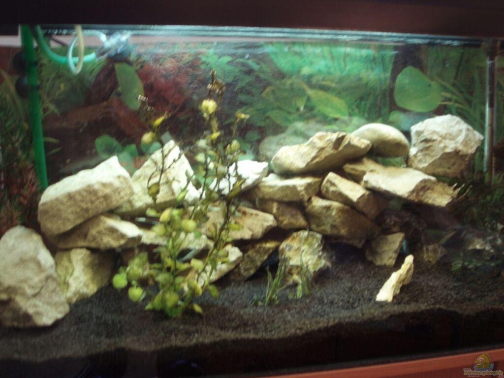 Aquarium von ocilares becken 8288 for Zierfische barsch