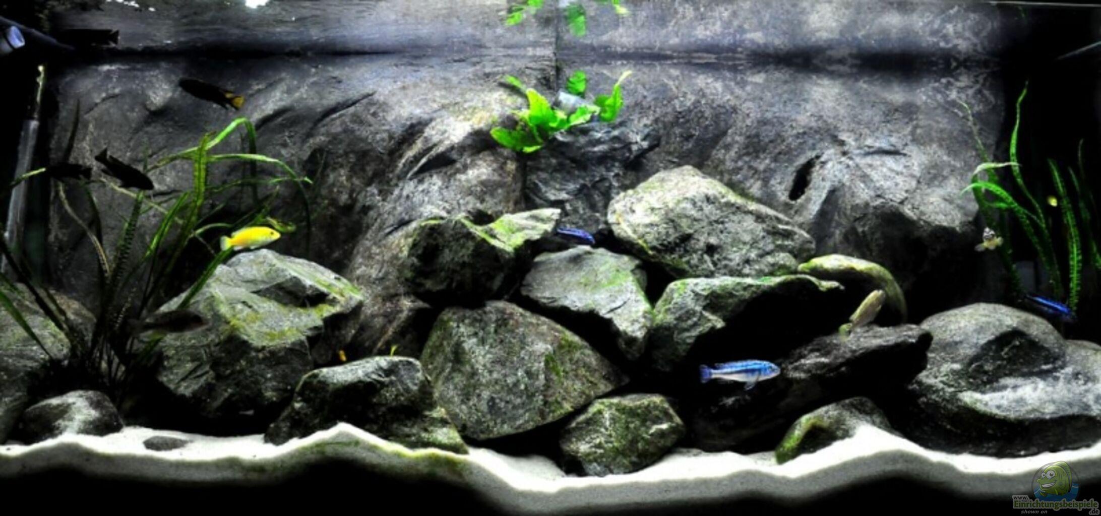 aquarium von pete becken 8409. Black Bedroom Furniture Sets. Home Design Ideas