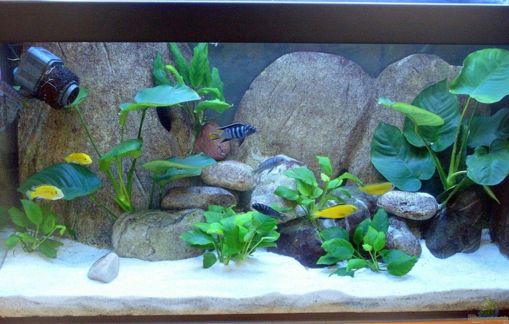 aquarium von vom becken 8444 einrichtungsbeispiele. Black Bedroom Furniture Sets. Home Design Ideas