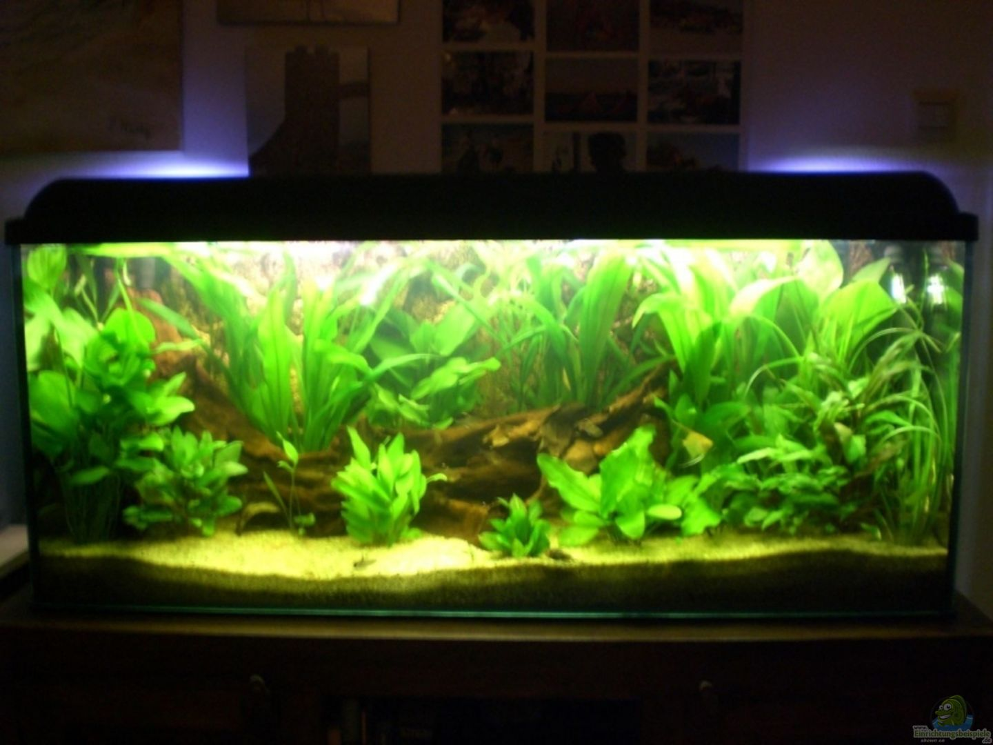 Aquarium von andreas haase becken 8462 for Aquarium 120x40x50