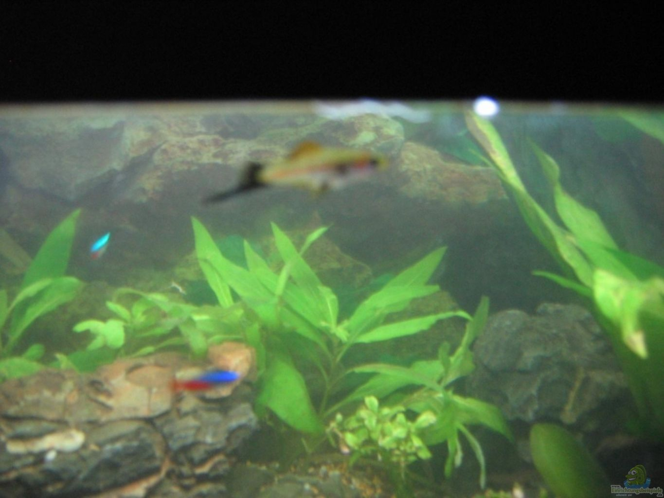 Example no 8492 from the category community tanks for Distilled water for fish tank