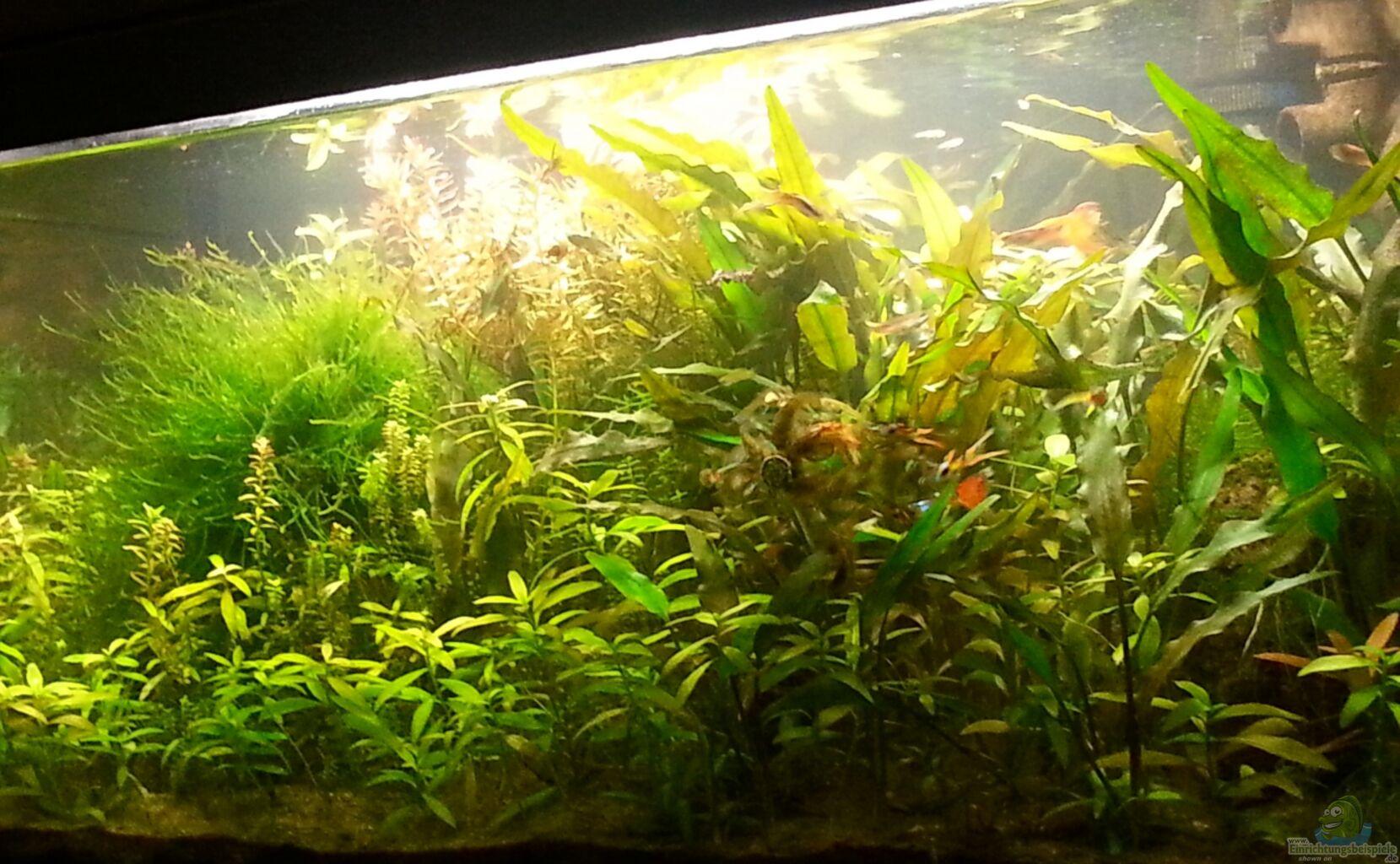 aquarium von nico the guppy mountains artenbecken. Black Bedroom Furniture Sets. Home Design Ideas