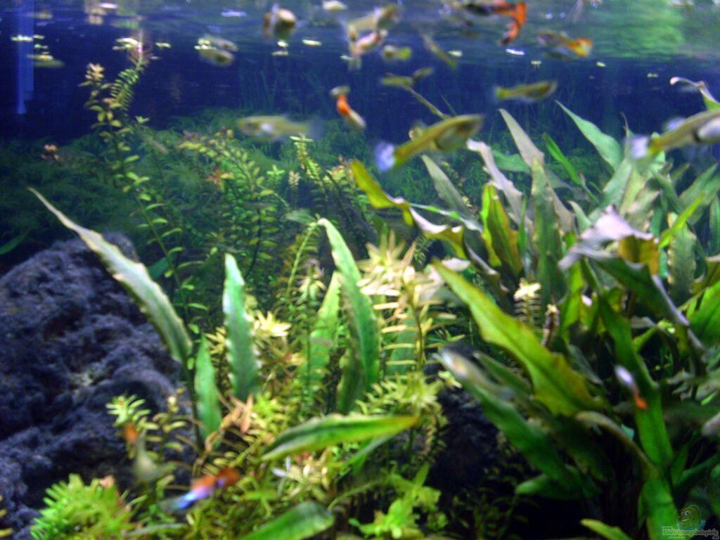 Aquarium von nico the guppy mountains artenbecken for Waterhome aquarium