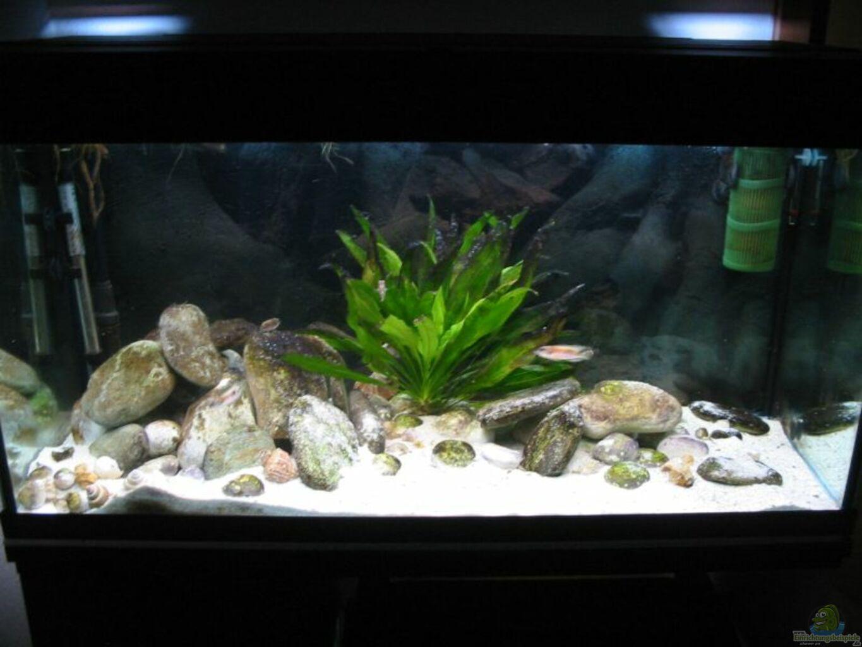 aquarium von felix fabian becken 864. Black Bedroom Furniture Sets. Home Design Ideas