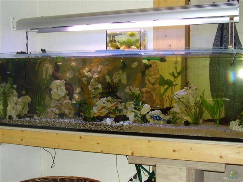 aquarium von peters laden becken 8709. Black Bedroom Furniture Sets. Home Design Ideas