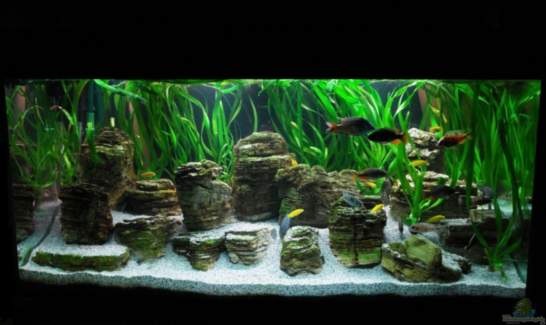aquarium von christian colling becken 8737. Black Bedroom Furniture Sets. Home Design Ideas
