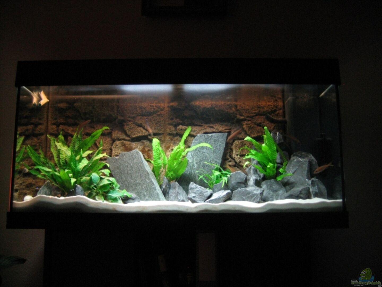 Aquarium nicht aktuelle einrichtung aus becken for Aquarium einrichtung