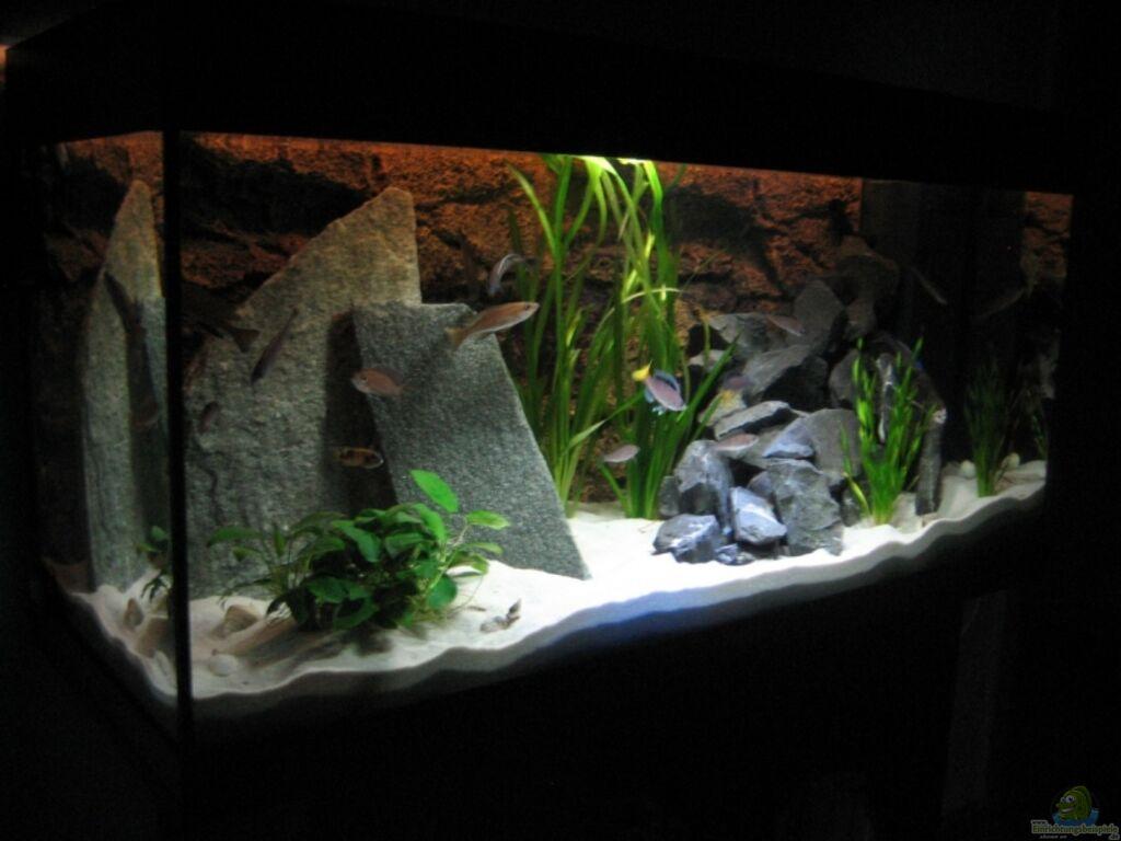 aquarium aktuelle einrichtung aus becken 8822. Black Bedroom Furniture Sets. Home Design Ideas