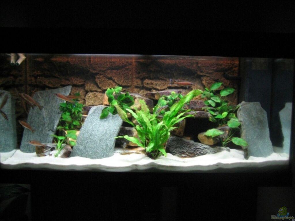 Aquarium von patrick b renfaller becken 8822 for Aquarium einrichtung