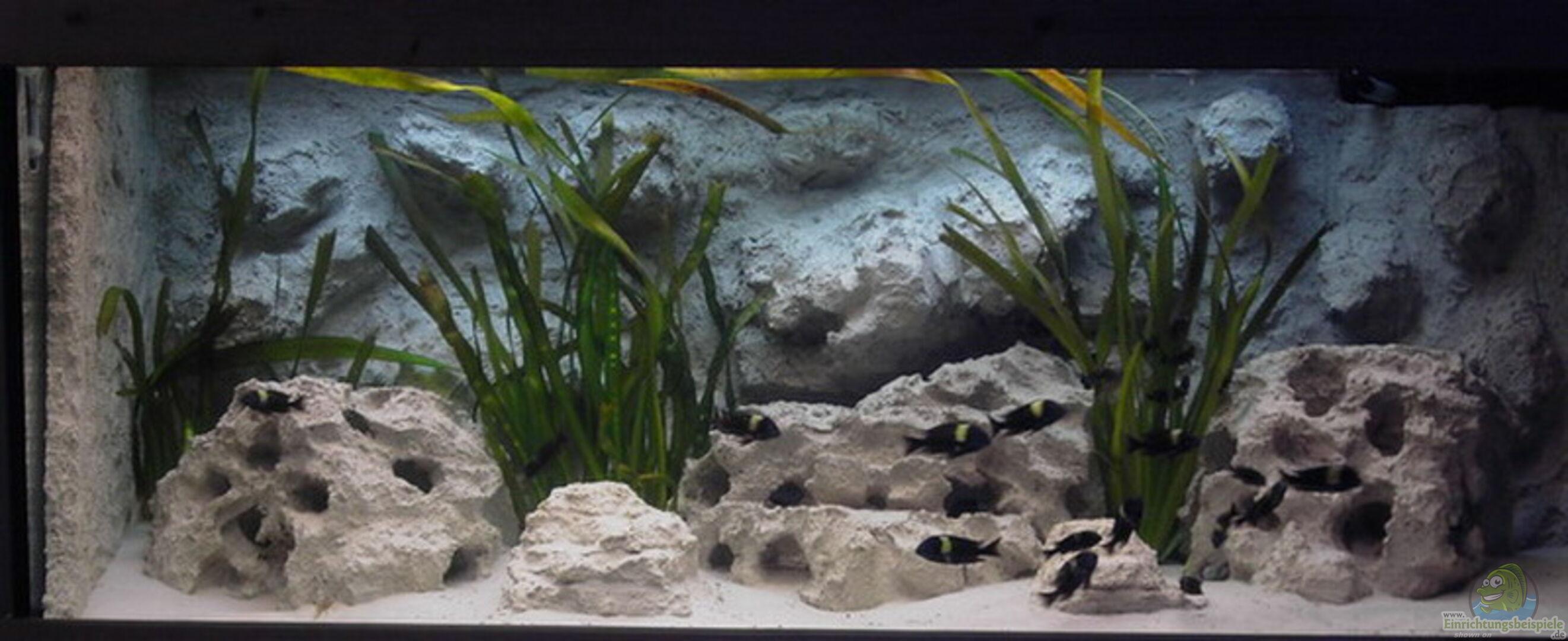 aquarium von enrico pinkert becken 883. Black Bedroom Furniture Sets. Home Design Ideas