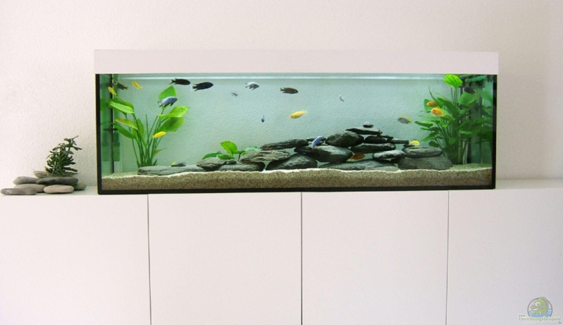 Aquarium im Wohnzimmer aus Becken 8877 von Hanspeter Widmer