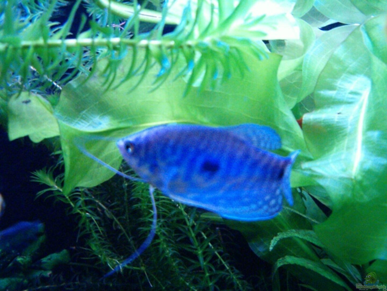 Aquarium von Nadine Wilmer: Becken 8880