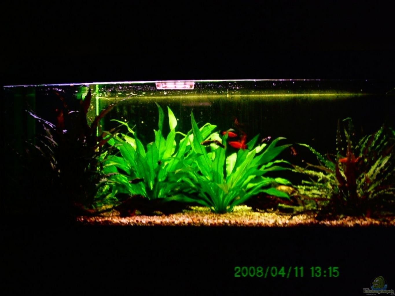 Example no 8882 from the category mixed america tanks for Aquarium corner decoration