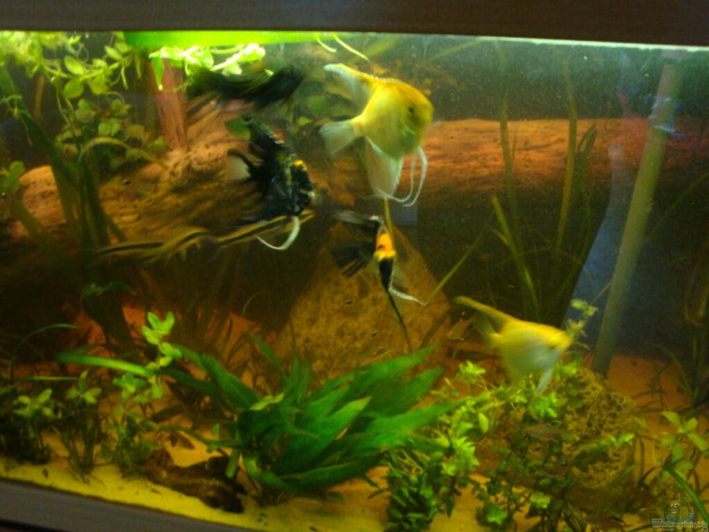 Aquarium von b1gt4nk skalar tank for Skalar aquarium