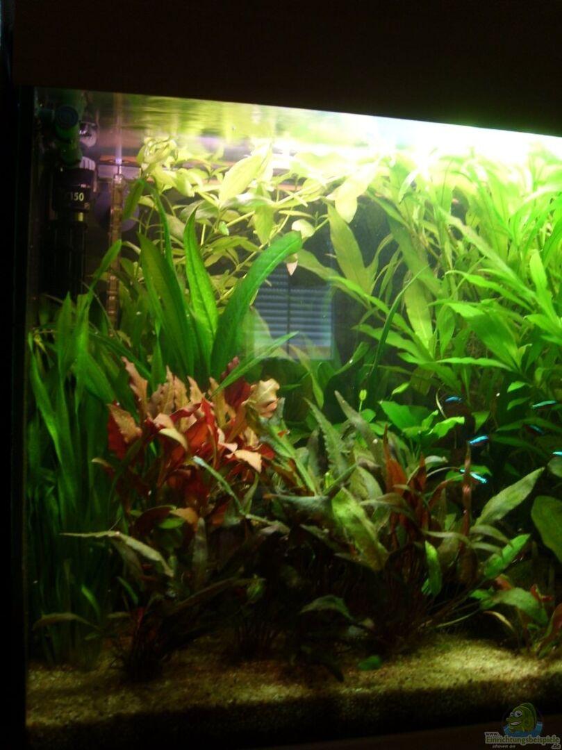 pflanzen im aquarium becken 8926 aus becken 8926 von andre kussin. Black Bedroom Furniture Sets. Home Design Ideas