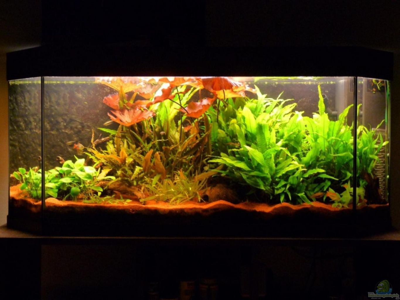 Aquarium von mat becken 8947 for Aquarium 120x40x50