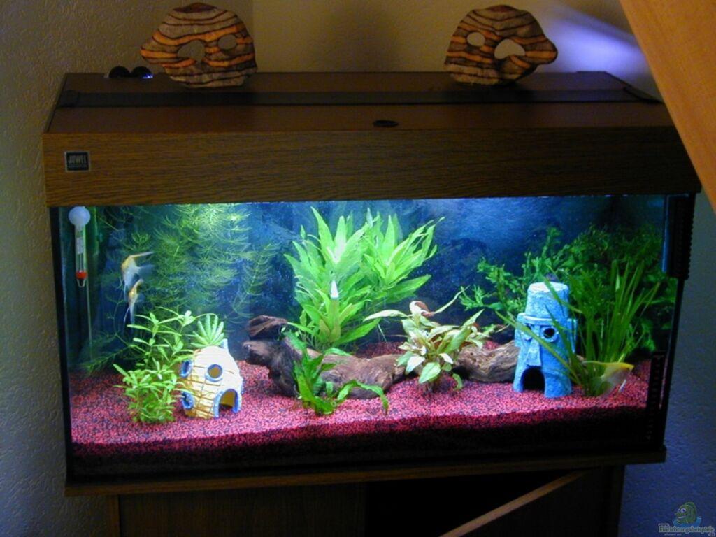 aquarium von marc scheer becken 9006. Black Bedroom Furniture Sets. Home Design Ideas