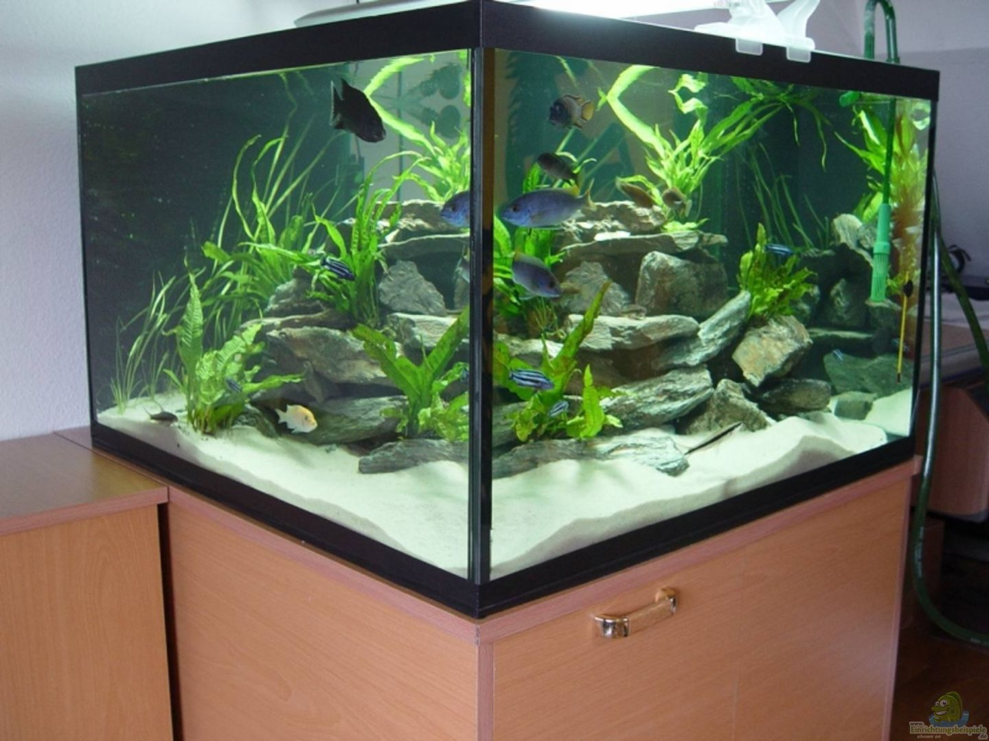 aquarium von mbunafan 9062 mbunabecken. Black Bedroom Furniture Sets. Home Design Ideas