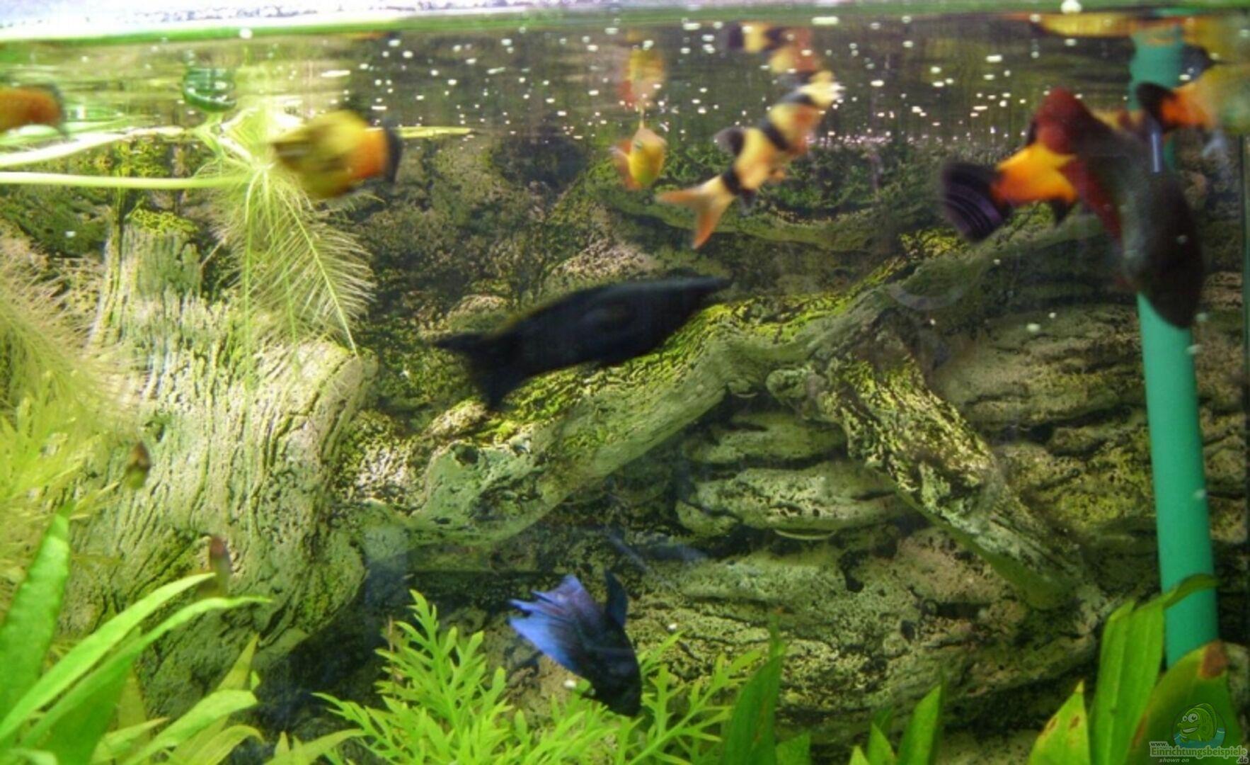 Aquarium von reddragon becken 9077 for Kampffisch becken