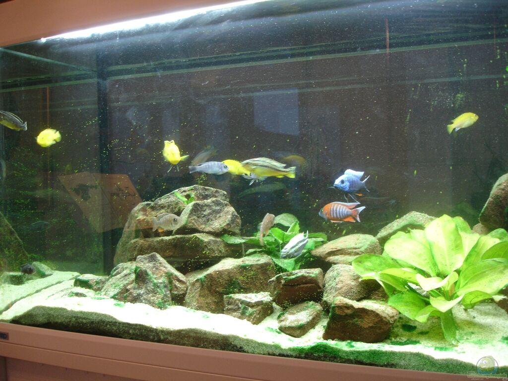 Aquarium Von Roadrunner 68 Malawi Im Wohnzimmer