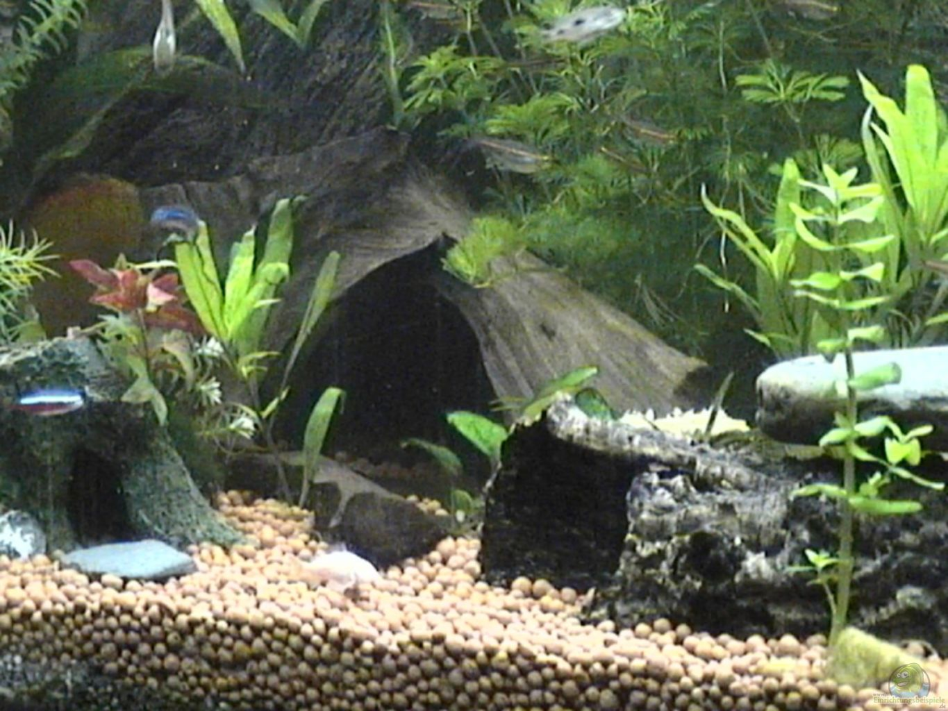 Example no 9347 from the category community tanks for Aquarium wurzel