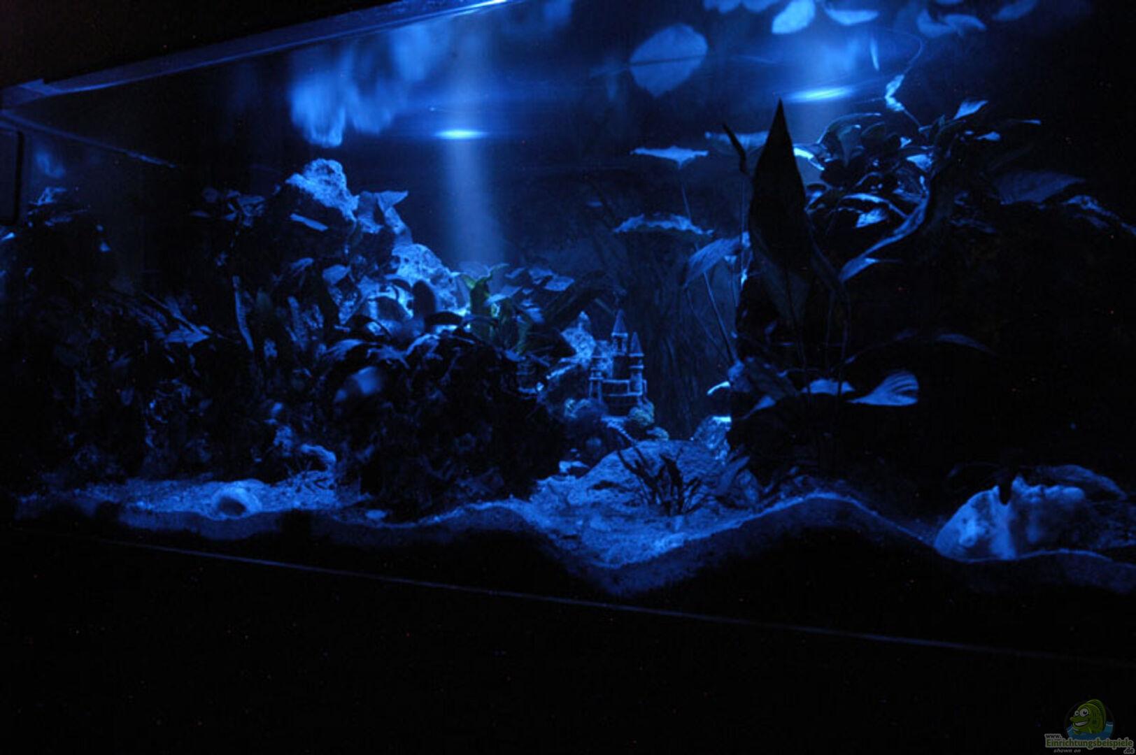 aquarium von gerhard schrenk becken 941. Black Bedroom Furniture Sets. Home Design Ideas