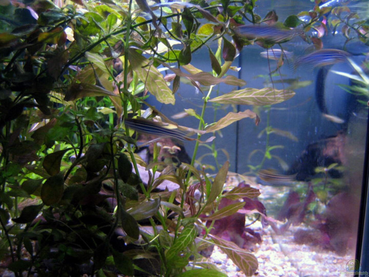 Aquarium von katharina becken 9592 for Waterhome aquarium