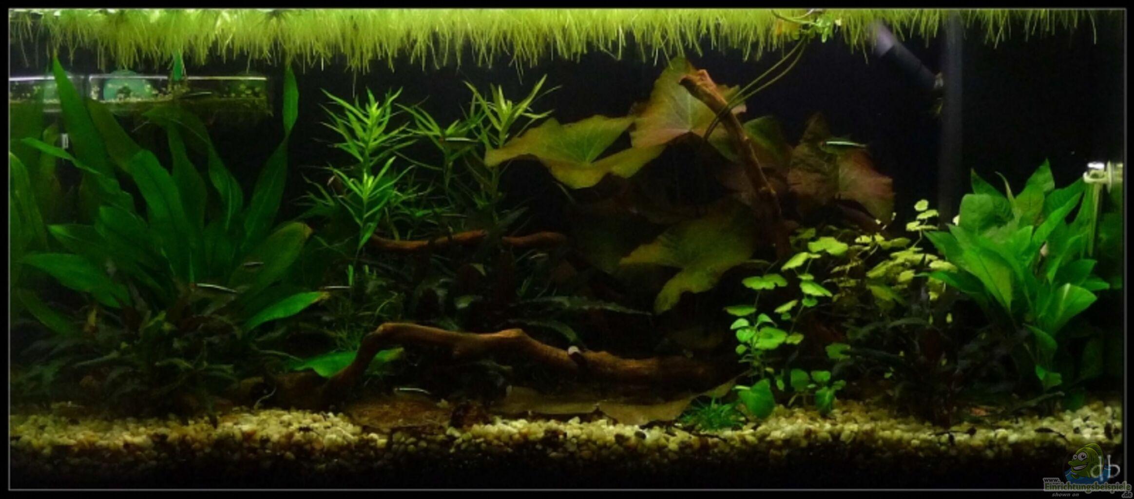 aquarium von dominique mein gro es. Black Bedroom Furniture Sets. Home Design Ideas