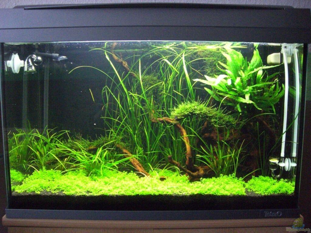 aquarium von alex malsam becken 9770. Black Bedroom Furniture Sets. Home Design Ideas