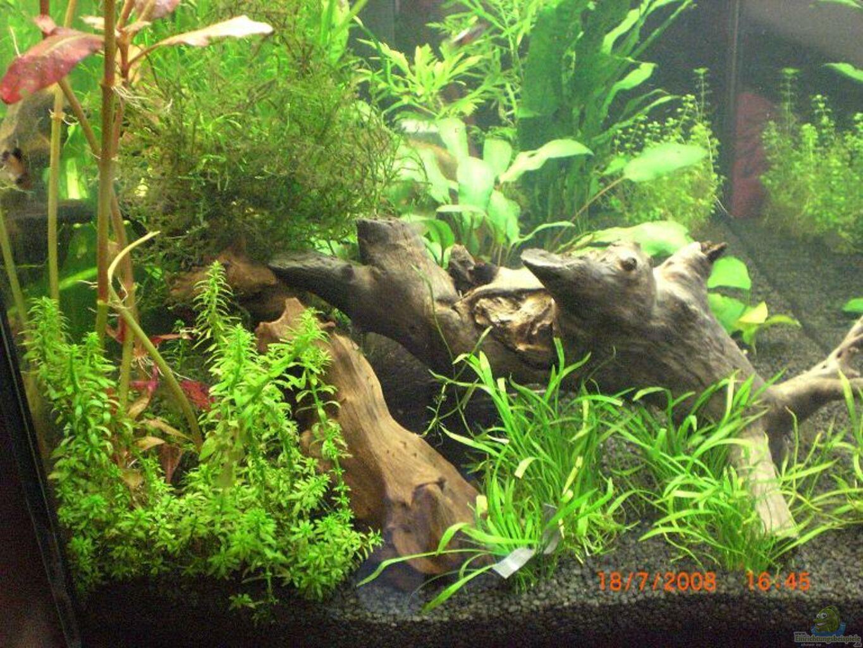 aquarium von marcel1811 becken 9794. Black Bedroom Furniture Sets. Home Design Ideas
