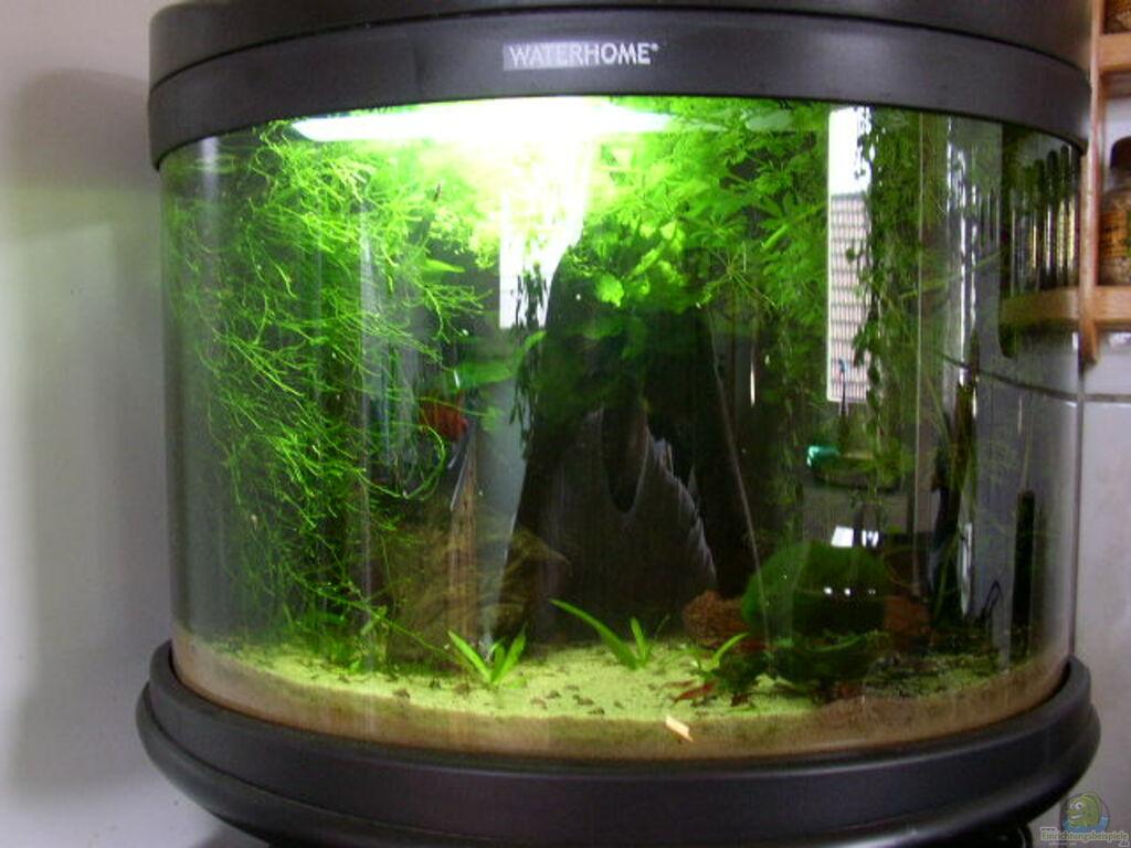 Aquarium von graf becken 9795 for Waterhome aquarium