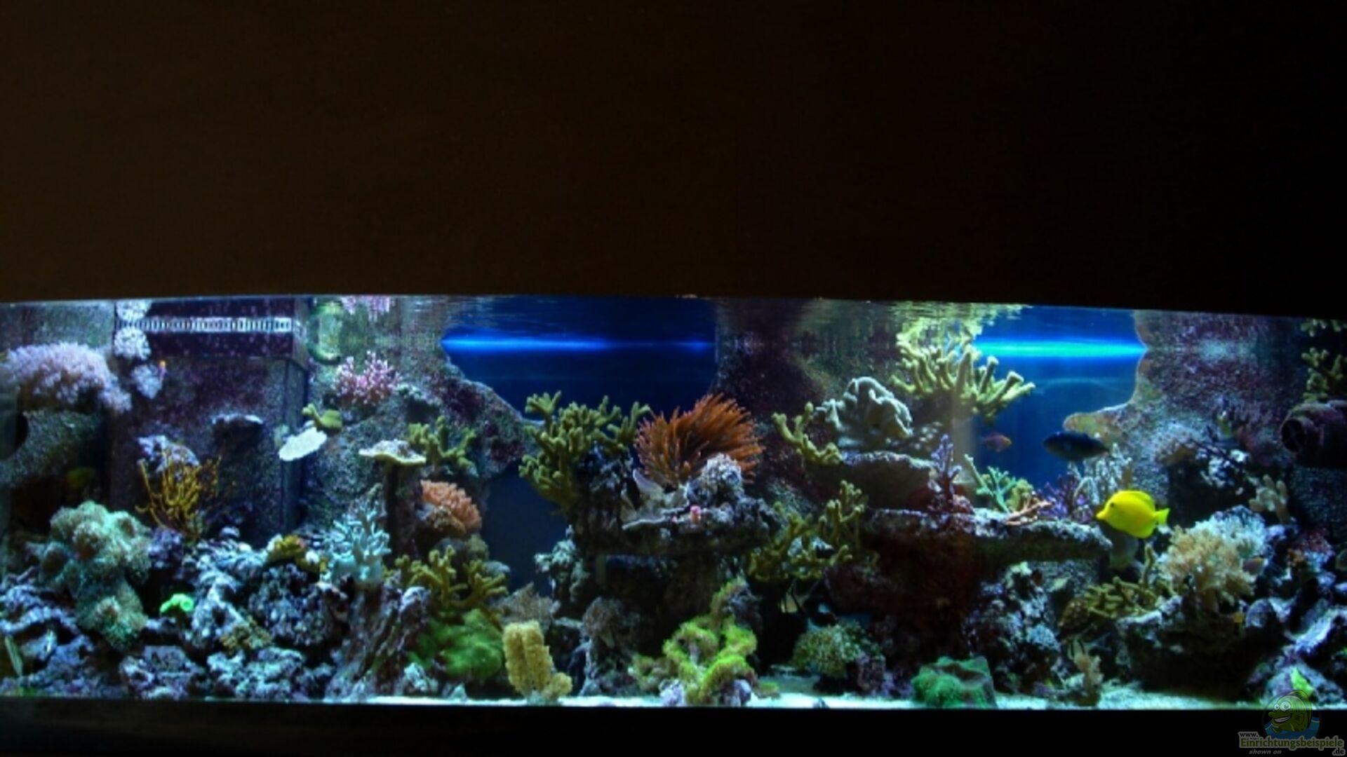 Aquarium von Sveni: Becken 9800