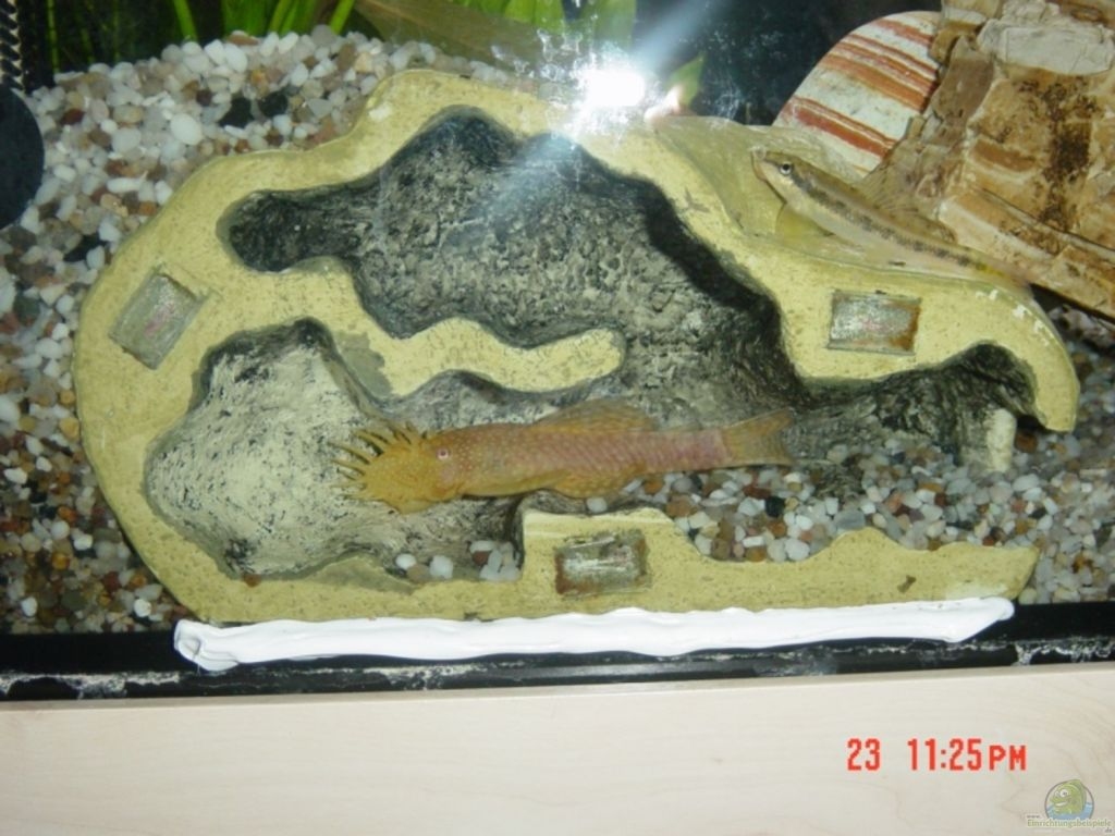 aquarium von dominik laufer becken 9913. Black Bedroom Furniture Sets. Home Design Ideas