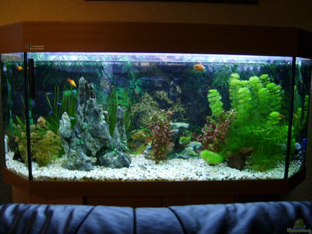 aquarien als hobby f r individualisten. Black Bedroom Furniture Sets. Home Design Ideas