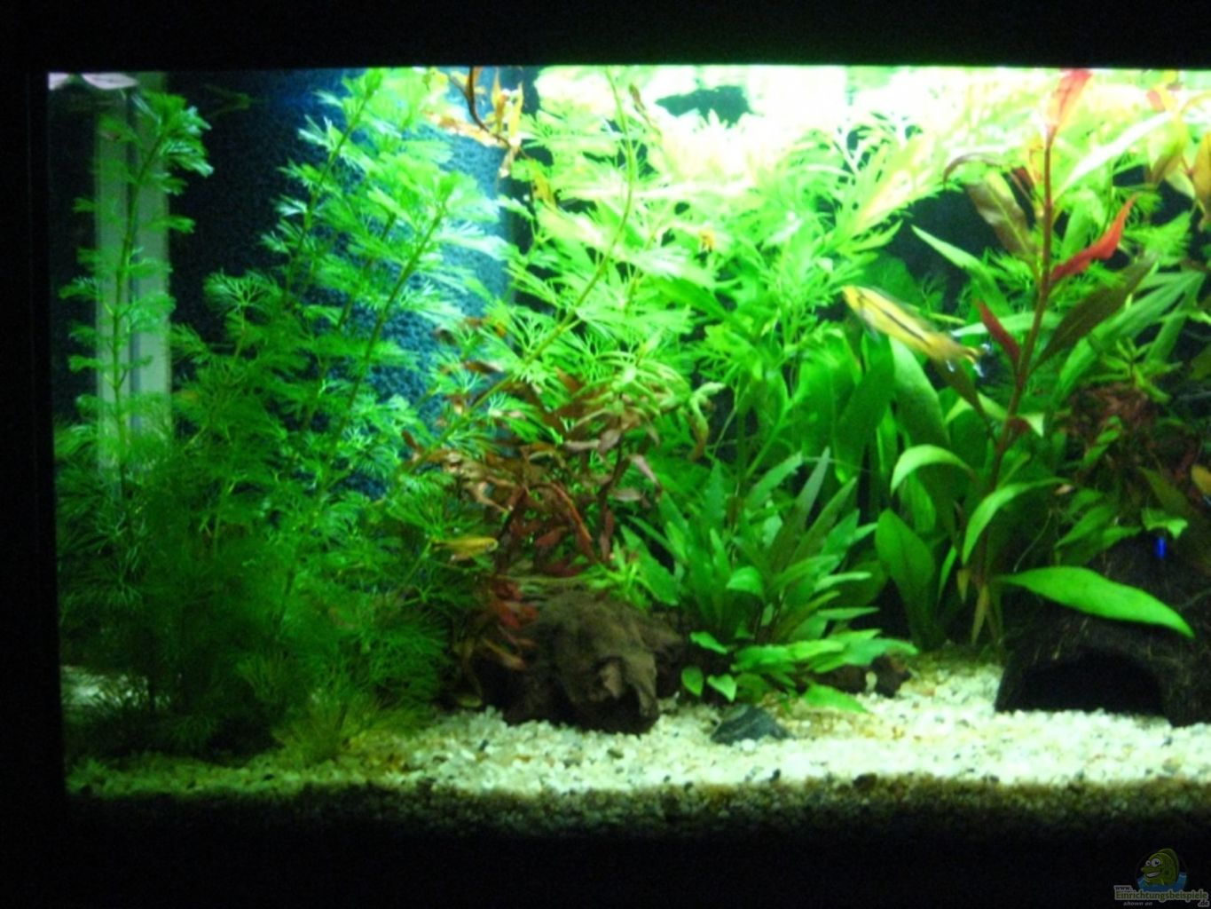 Example no 9951 from the category mixed america tanks for Aquarium corner decoration