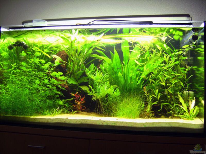 bepflanzung 160l aquarium forum. Black Bedroom Furniture Sets. Home Design Ideas