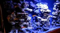 Video Njassae Canyon Malawi Aquarium 432 Liter