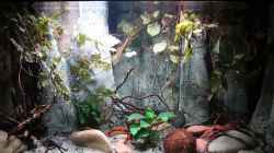Video Aquarium West Africa Riverside Biotop Neueinrichtung