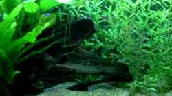Video Aquarium 120x50x50