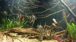 Video Flooded forest feeding time 2 von Aqua fan (FBwh8fWYKPo)